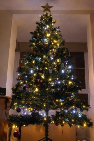 2013 Christmas Tree - 15 December 2013