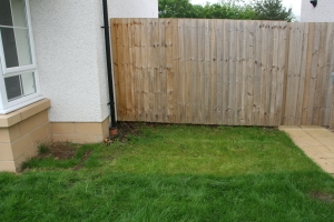 Blank canvas: grass and fence.