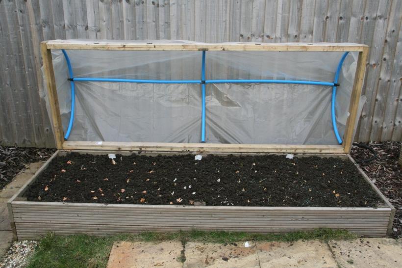 Winter planted onions, Garlic and Shallots