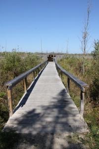 Bird Hide and boardwalk