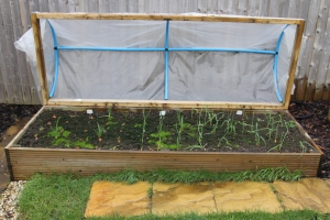 Onion bed with cover open