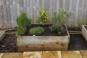 Herb Bed (relocated and replanted)