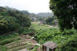 Gardens of walled village Lo Wai